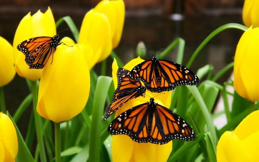 Бабочки: описание, виды самых красивых