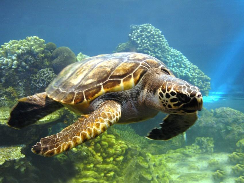 Чем можно покормить черепаху если нет корма