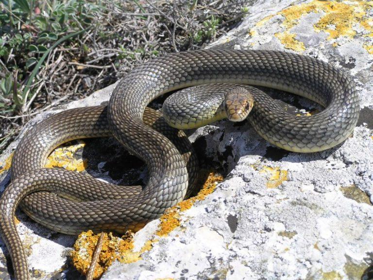 змеи ростовской области фото и названия бузова выступает
