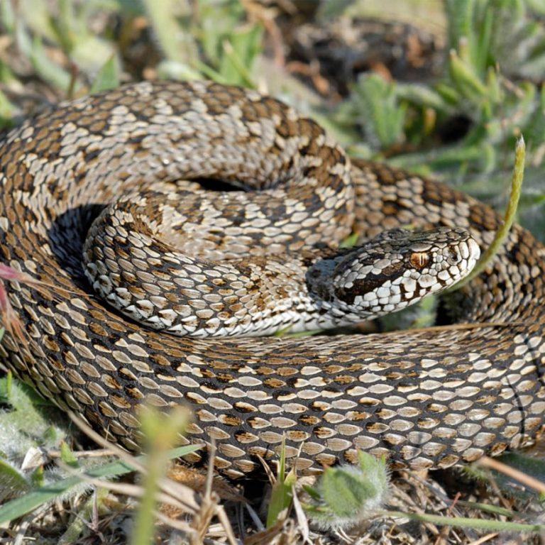 змеи ростовской области фото и названия него были добавлены