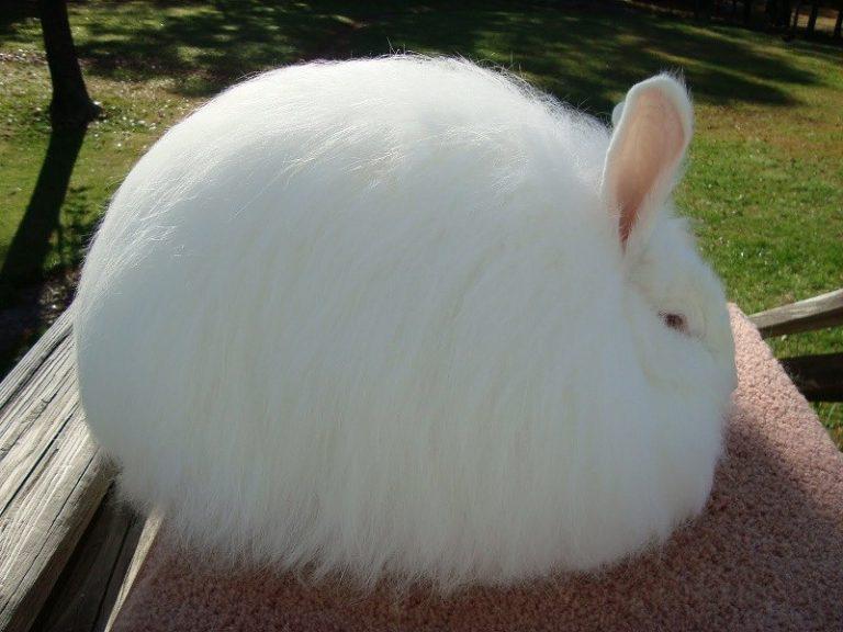 Пуховый зайчик фото