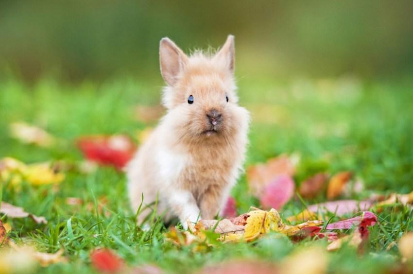 Как содержать карликовых кроликов в домашних условиях