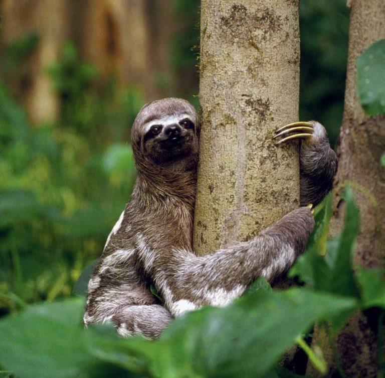 избегать резких картинки ленивца фото ковёр, рябиновый наряд