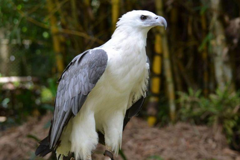 белый орел фото животные верные друзья