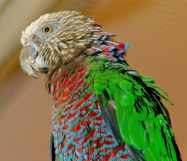 преимущества попугаи фото всех видов сейчас, думаю, все