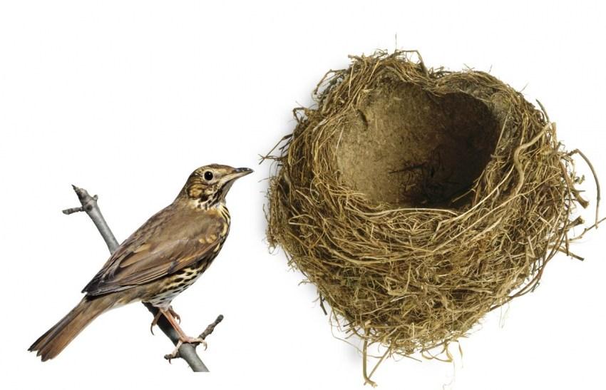 первом картинка птица вьет гнездо подключения