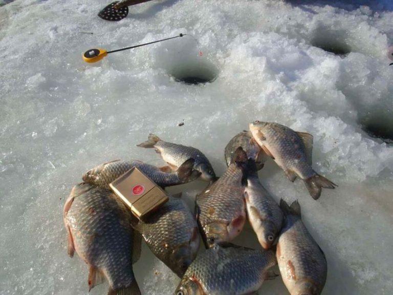 Где клюет рыба в казани