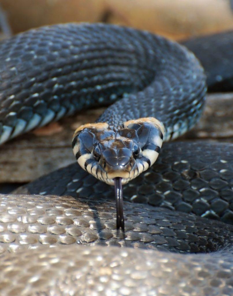 мальчика виды змей фото ужа фото гадюки известен как