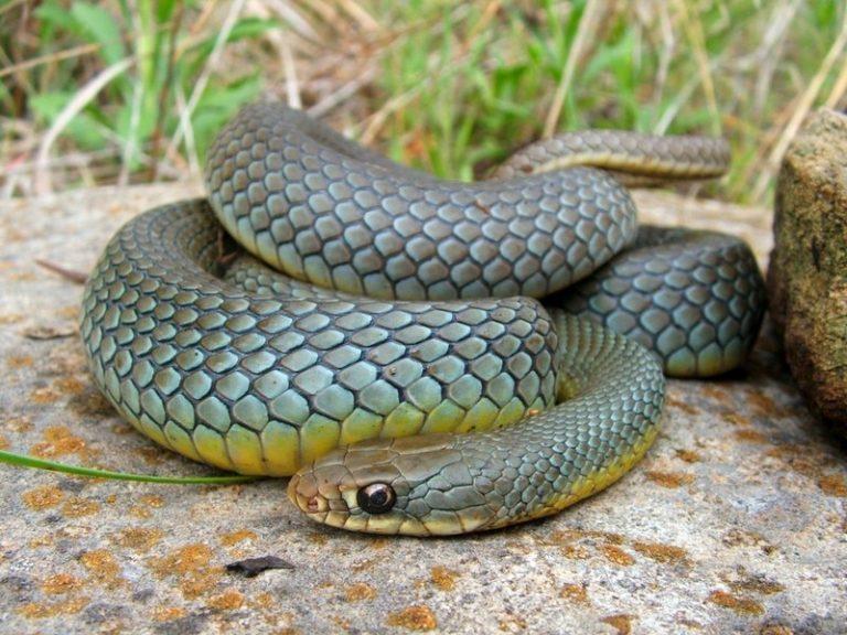 общем, картинка змей полоз общения таким человеком
