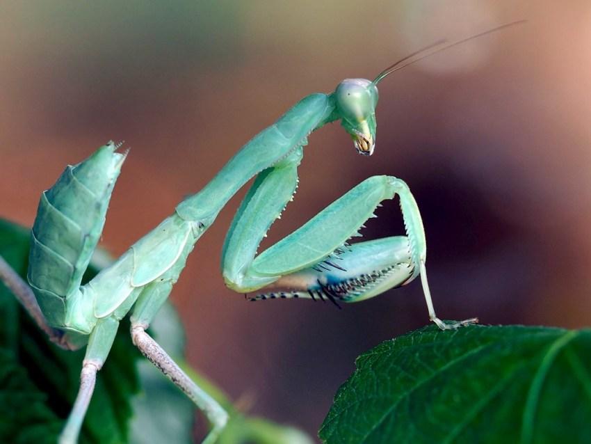 Бабочка с длинным носом