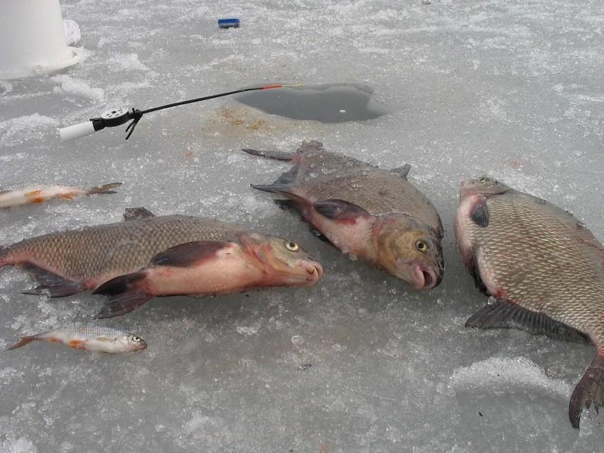 Ловля леща в астрахани зимой